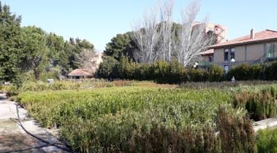 La Diputación de Zaragoza distribuye más de 42.000 plantas a 134 municipios de la provincia para decorar sus espacios verdes