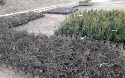 La Diputación de Zaragoza distribuye más de 50.000 plantas para los parques y jardines de 145 localidades de la provincia