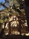 Los fuertes vientos del fin de semana derriban uno de los árboles del claustro del monasterio de Veruela