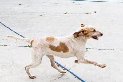 ¿Buscas una mascota? Adóptala en el centro de protección animal de la Diputación de Zaragoza